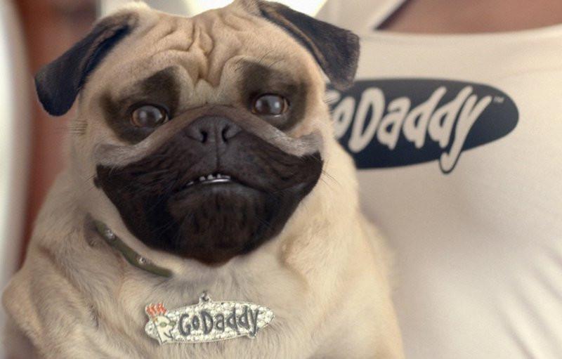 Resultado de imagem para o cachorro da go daddy